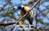 kormlenie-ptic-na-ostrove-hortica16776.jpg